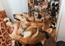 Den hemlösa hundkapplöpningen som kastas av folk Arkivbilder