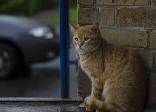 Den hemlösa katten sitter royaltyfri fotografi