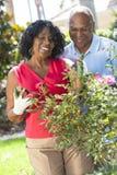 Den höga afrikansk amerikanmankvinnan kopplar ihop att arbeta i trädgården Royaltyfria Foton