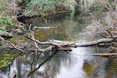 Den Hillsborough floden parkerar Fotografering för Bildbyråer