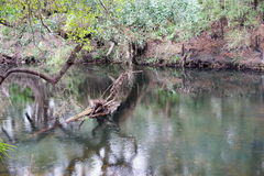 Den Hillsborough floden parkerar Arkivbilder