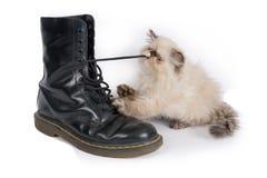 Den Himalauan katten som spelar med en känga, snör åt Arkivbild