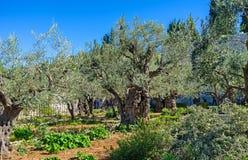 Den historiska trädgården arkivfoton