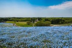 Den Hitachi sjösidan parkerar Fotografering för Bildbyråer