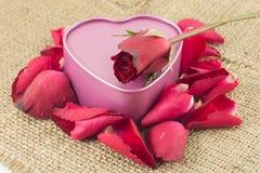 Den hjärta formade metallasken med en röd ros förläggas på säckväv Royaltyfri Foto