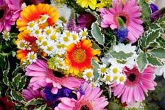 Den härliga färgrika samlingen av blommor fjädrar sommarberöm Arkivbild