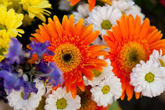 Den härliga färgrika samlingen av blommor fjädrar sommarberöm Arkivfoto