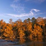 Den härliga nedgången färgar skogen Royaltyfri Fotografi