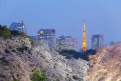 Den härliga sakura körsbärsröda blomningen tänder upp och det Tokyo tornet Royaltyfri Foto