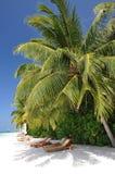 Den härliga tropiska stranden med gömma i handflatan och sunbeds Arkivbilder