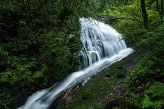 Den härliga vattenfallet i skog på Doi Inthanon Arkivfoto