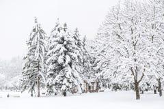 Den härliga vintern parkerar landskap från Sofia, Bulgarien Arkivfoto
