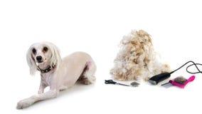 Den Hund pflegen lokalisiert auf weißem Hintergrund Stockfotos