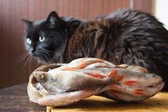 Den hungriga svarta katten väntar på matställen lies för fiskeis bara blockerade vinterzander Djupfryst r Arkivbild