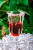 Den i lager körsbäret sköt coctailen på is som isolerades på grön bladnaturbakgrund close upp royaltyfri fotografi
