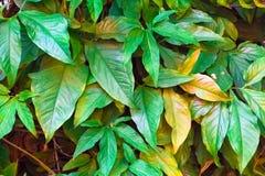 Den idérika gröna bladmodellen och textur planlägger med bakgrund Royaltyfri Foto