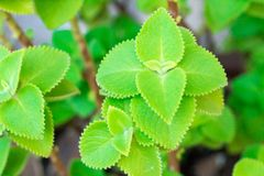 Den idérika gröna bladmodellen och textur planlägger med bakgrund Royaltyfria Bilder