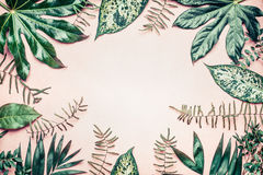 Den idérika naturramen som göras av tropiskt, gömma i handflatan och ormbunkesidor på pastellfärgad bakgrund Royaltyfri Foto