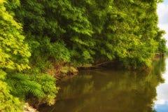 Den Ijam naturen parkerar strandpromenaden längs Tennessee River Arkivfoto