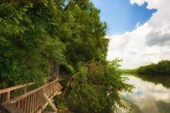 Den Ijam naturen parkerar strandpromenaden längs Tennessee River Royaltyfri Bild