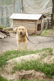 Den ilskna hunden som ?r utomhus- mot tr?hundkojan fotografering för bildbyråer