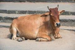 Kon som ligger på, kliver tempelet Royaltyfri Foto