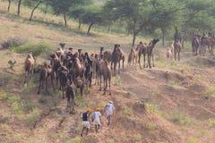 Den indiska nomaden deltog i den årliga Pushkar kamlet Mela Arkivbilder