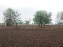 Den indiska plockningen förberedde sig sparat för jordbruk arkivfoton