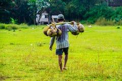 Den indonesiska bonden kommer med kokosnöten royaltyfria bilder