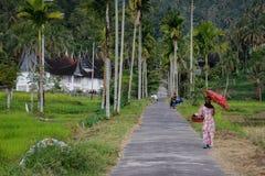 Den indonesiska kvinnan i traditionell klänning promenerar en risfält med palmträd arkivbild