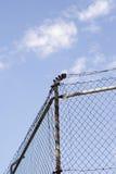 den ingen lägerstaketkeepen fängslar ut att inkräkta för säkerhet Arkivfoto