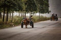 Den inhemska kon drar en vagn för trans. i Tam Coc, VI Arkivfoto