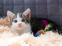 Den inhemska randiga kattungen spelar med en leksak royaltyfri fotografi