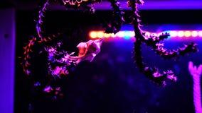 Den inomhus kaktuns ledde phyto ljus royaltyfri bild