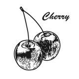 Den inristade körsbäret skissar royaltyfri illustrationer