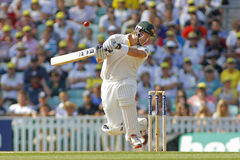 Den internationella syrsan England V Australien Investec Ashes 5th Tes Royaltyfri Foto