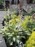 Den intressanta idén av registreringen av en blomsterrabatt nära huset royaltyfria foton