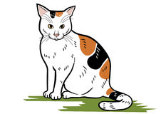 den intresserade katten isolerade looken skjuten sittande studiowhite Arkivbild