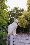 den intresserade katten isolerade looken skjuten sittande studiowhite Royaltyfri Bild