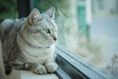 den intresserade katten isolerade looken skjuten sittande studiowhite Royaltyfri Fotografi
