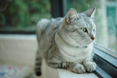 den intresserade katten isolerade looken skjuten sittande studiowhite Royaltyfria Foton