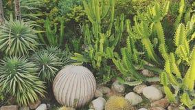 den isolerade kaktusen smutsar white Arkivfoto