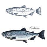 Den isolerade laxfiskvektorn skissar symbolen royaltyfri illustrationer