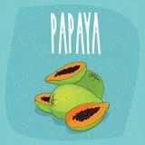 Den isolerade papayaen bär frukt helt och snittet in i stycken royaltyfri illustrationer