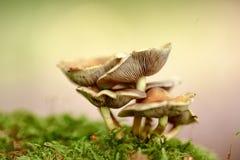 den isolerade skogen plocka svamp white Royaltyfri Foto