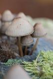 den isolerade skogen plocka svamp white Arkivbilder