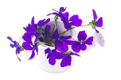 Den isolerade trädgårds- design-buketten av lilor blommar i den vita waterien Arkivfoto