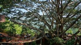 Den jätte- coffee shop och restaurangen på det stora trädet i Chiangmai Thailand royaltyfri bild