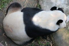Den jätte- pandan är i lekplatsen arkivbild
