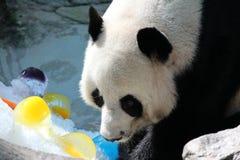 Den jätte- pandan sover i lekplatsen royaltyfria foton